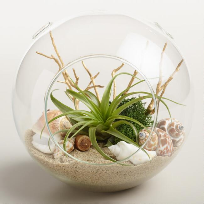 Beachy terrarium wiht sand and shells