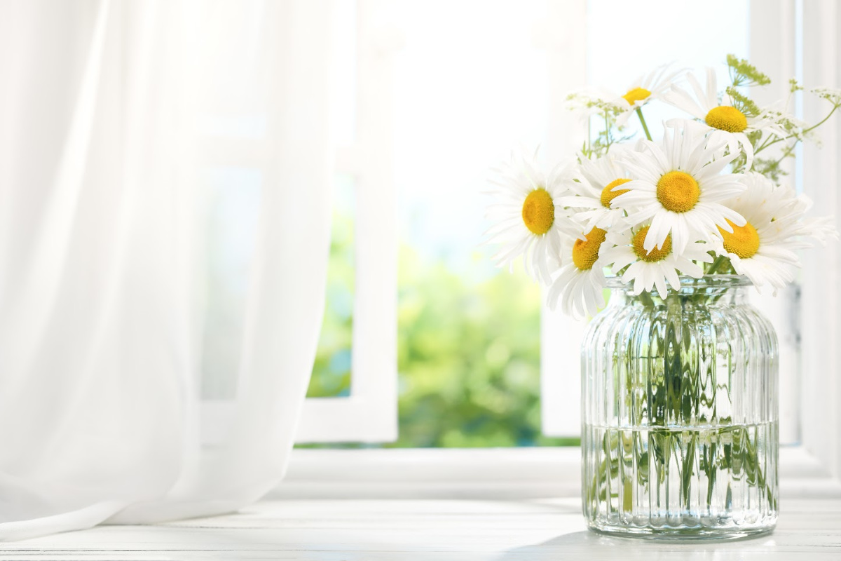Bouquet of daisy flowers near window with curtain